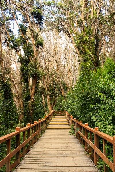 bosque-de-arrayanes