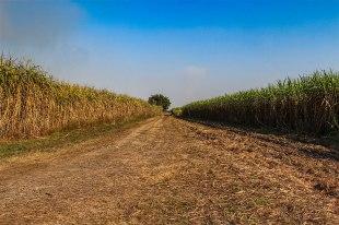 El Camino de las 10.000 Fotografías (86)