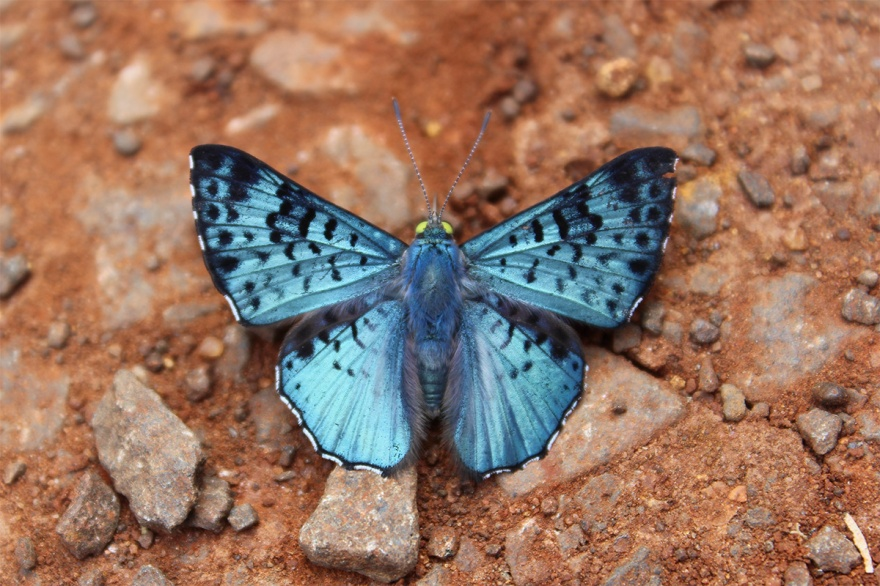 mariposa-2