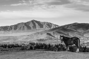 El Camino de las 10.000 Fotografías (134)