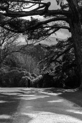 El Camino de las 10.000 Fotografías (335)