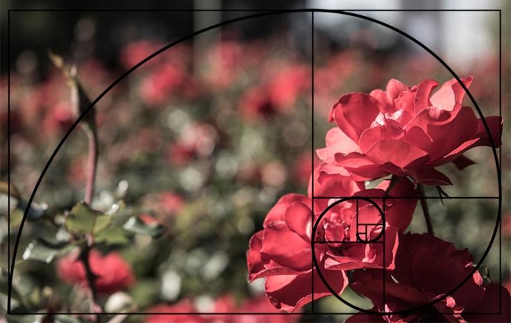 Rosas-Fibonacci
