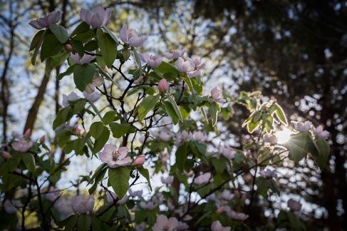 Primavera-10