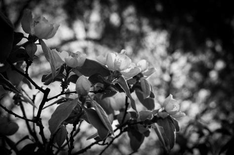 Primavera-ByN-10