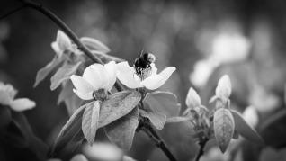 Primavera-ByN-3