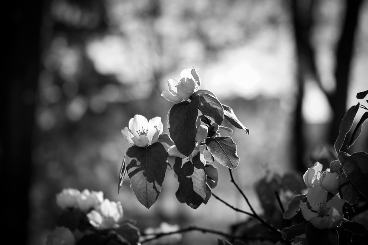 Primavera-ByN-6