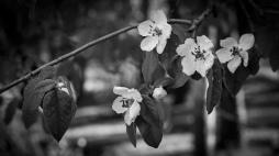 Primavera-ByN-8