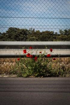 El Camino de las 10.000 Fotografías (430)