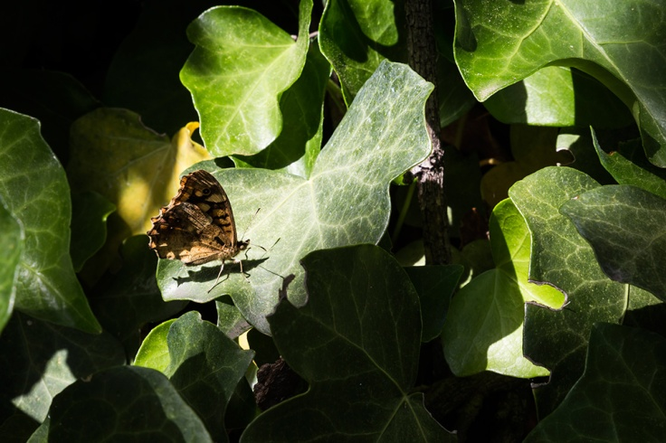 Naturaleza-Urbana-(7-de-17)