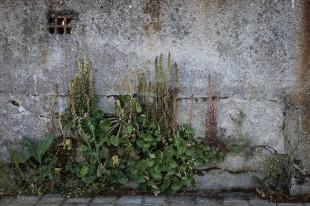 El Camino de las 10.000 Fotografías (429)