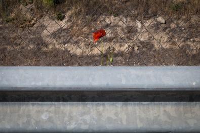 El Camino de las 10.000 Fotografías (559)