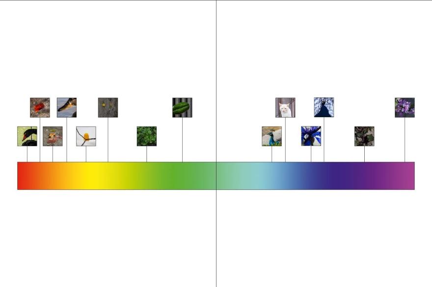 Espectro-Visible