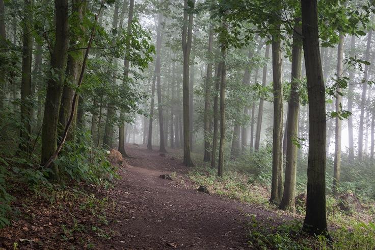 Niebla-(4-de-21)