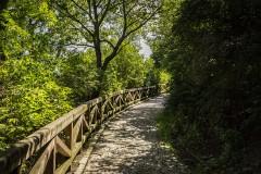 El Camino de las 10.000 Fotografías (612)