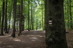 El Camino de las 10.000 Fotografías (693)